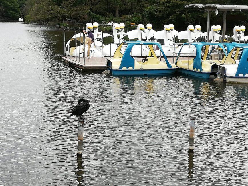 井の頭公園ボート