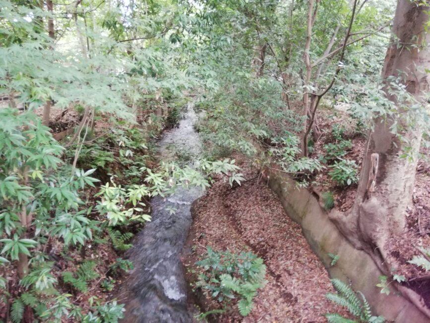 玉川上水の緑道