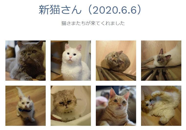 保護猫カフェきゃりこ