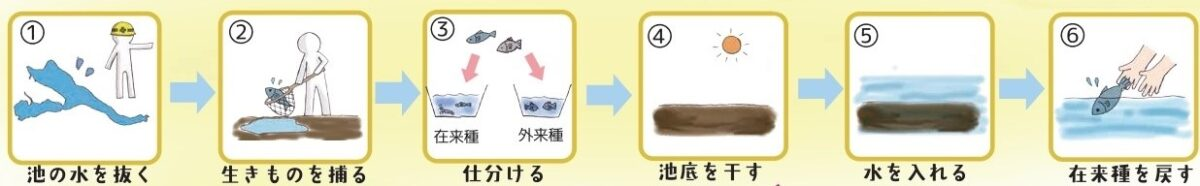 かいぼりのフロー