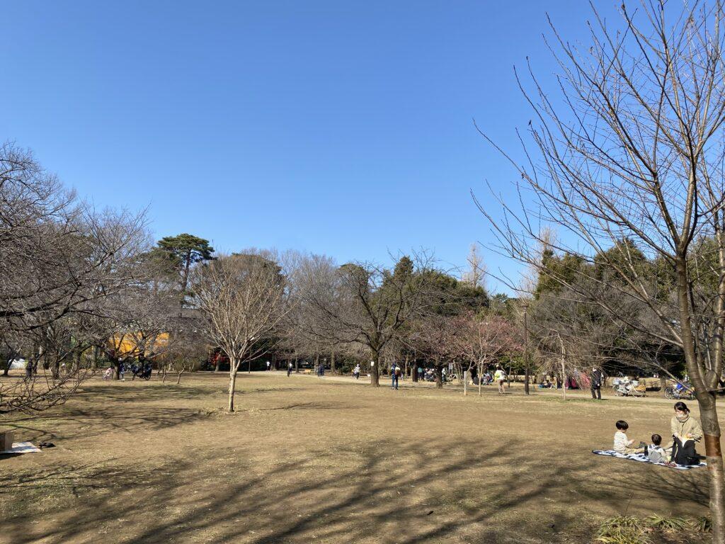 井の頭公園 西 桜