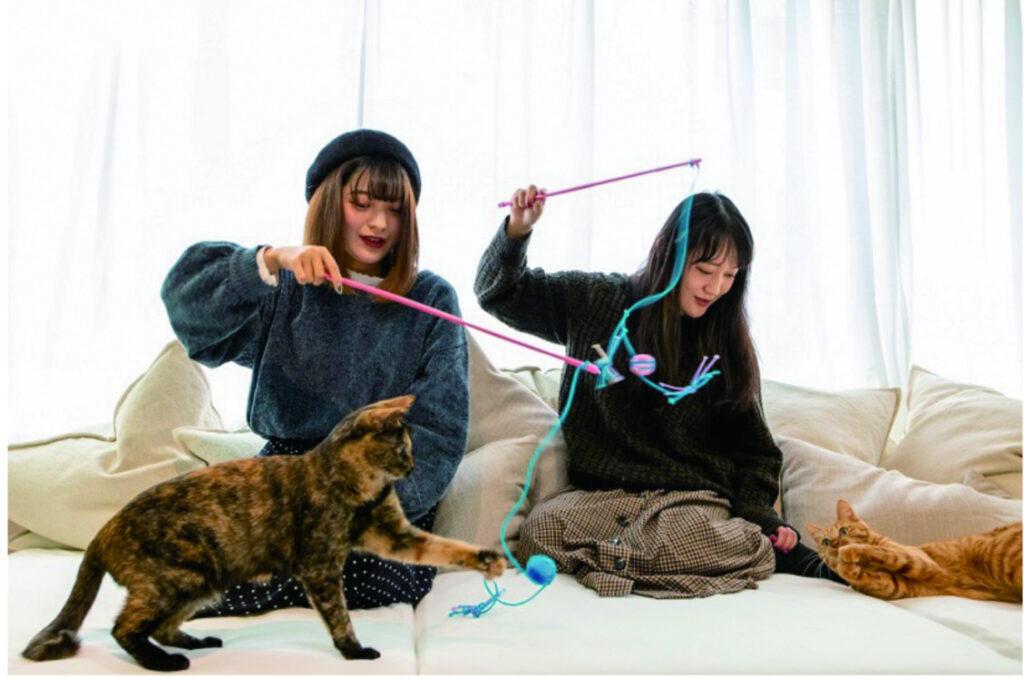 吉祥寺カピねこカフェ