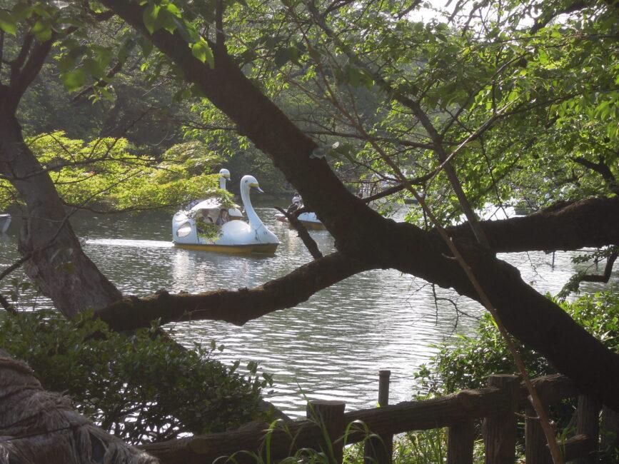井の頭公園02