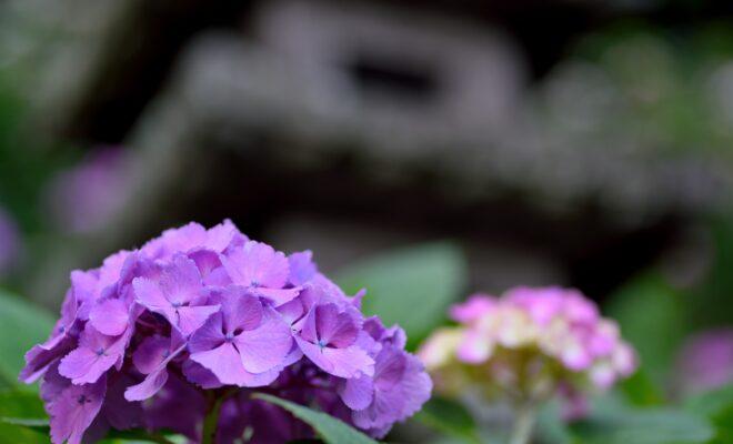 AC 寺社仏閣