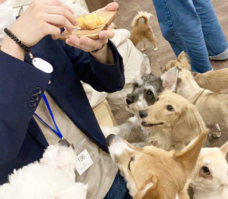 puppy cafe Rio 吉祥寺店で子犬におやつをあげる姿