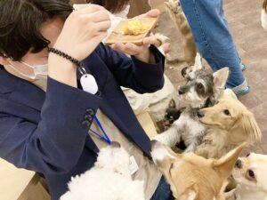puppy cafe Rio 吉祥寺店で子犬に見つめられる姿