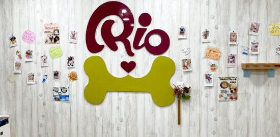 犬カフェ「Rio」吉祥寺店