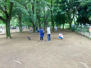 小金井公園ドッグランの小型犬エリア内部①