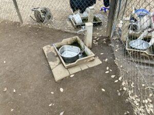 小金井公園ドッグランの小型犬エリア内部にある水飲み場