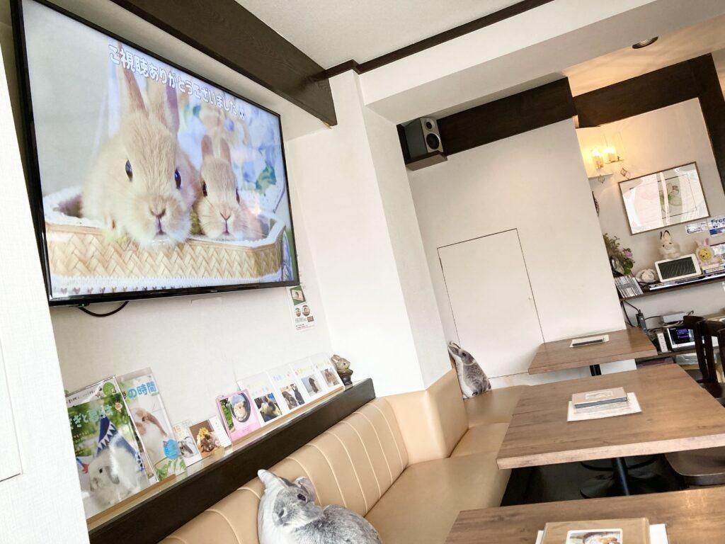 うさぎカフェ「カフェ・ミニヨン」店内②